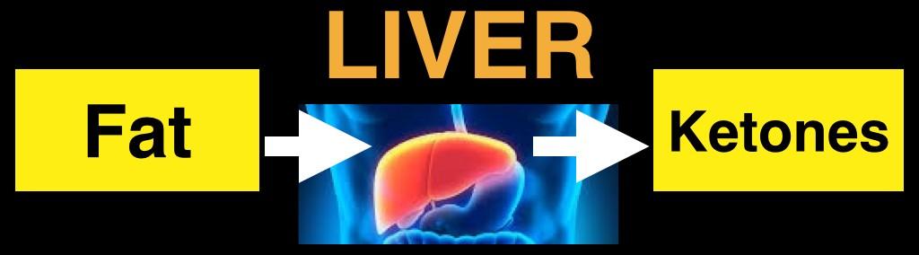 Liver.001