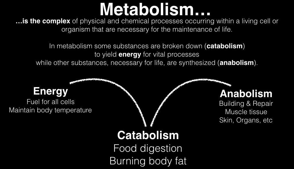 metabolism-001