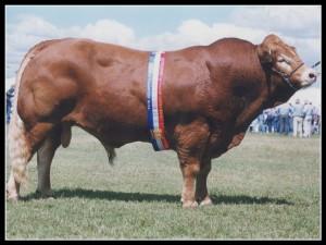 Bull.001